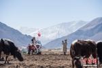 西藏举行传统春耕仪式 - 中国西藏网