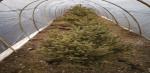 那曲植树试验示范基地多措并举确保苗木越冬 - 科技厅