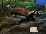 西藏自然科学博物馆自然馆动物标本 三语标识牌更换工作基本完成 - 科技厅